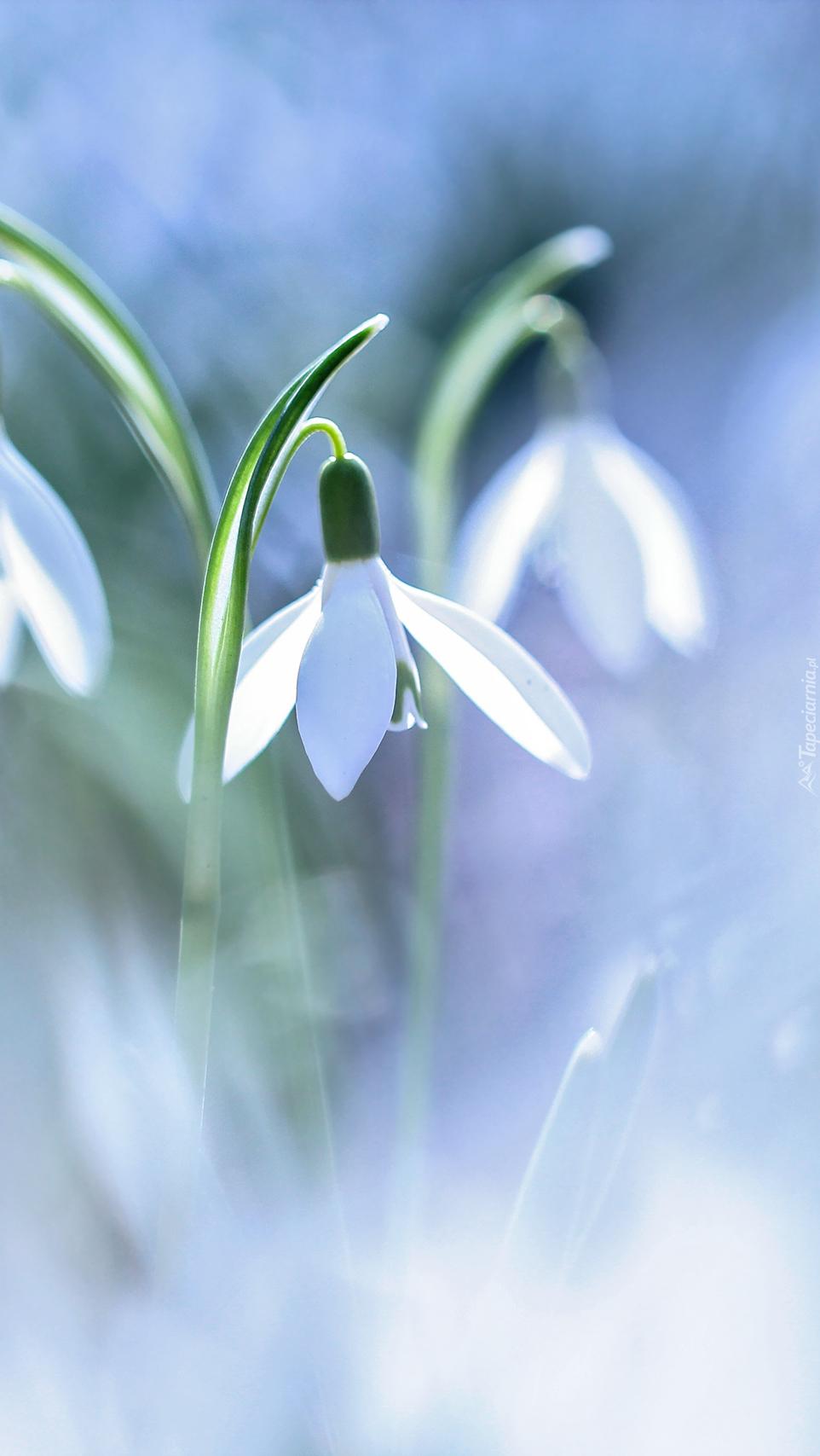 Czują wiosnę