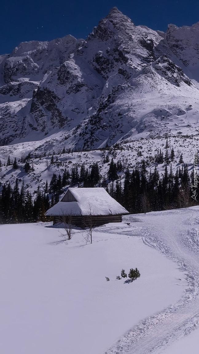 Dolina Zielona Gąsienicowa zimową porą