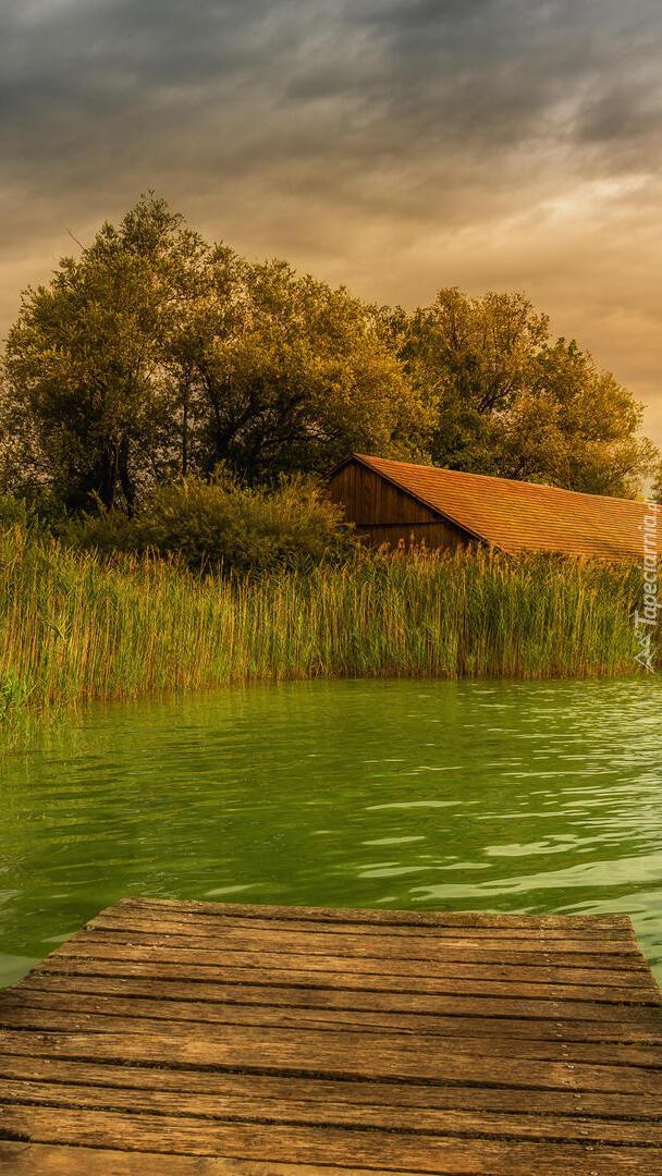 Dom pod drzewami nad jeziorem