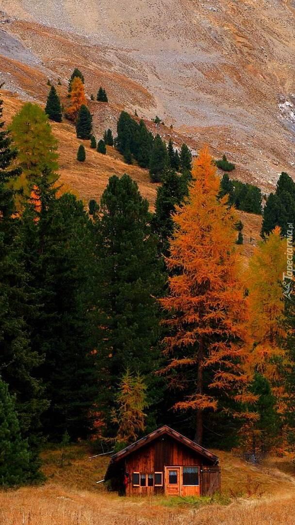 Dom pod jesiennymi drzewami