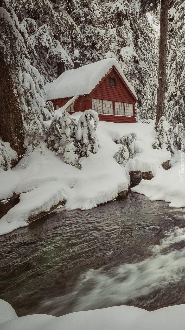 Dom pod ośnieżonymi drzewami nad potokiem