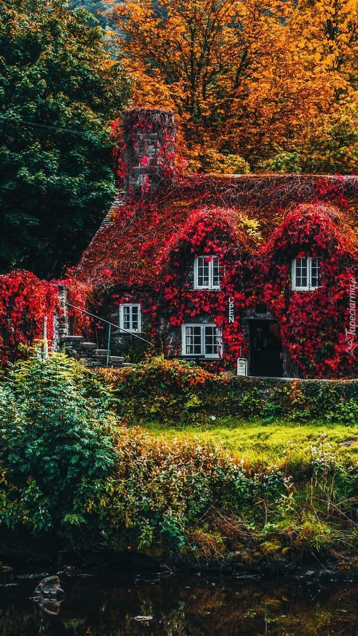 Dom Tu Hwnt ir Bont pokryty jesiennymi liśćmi