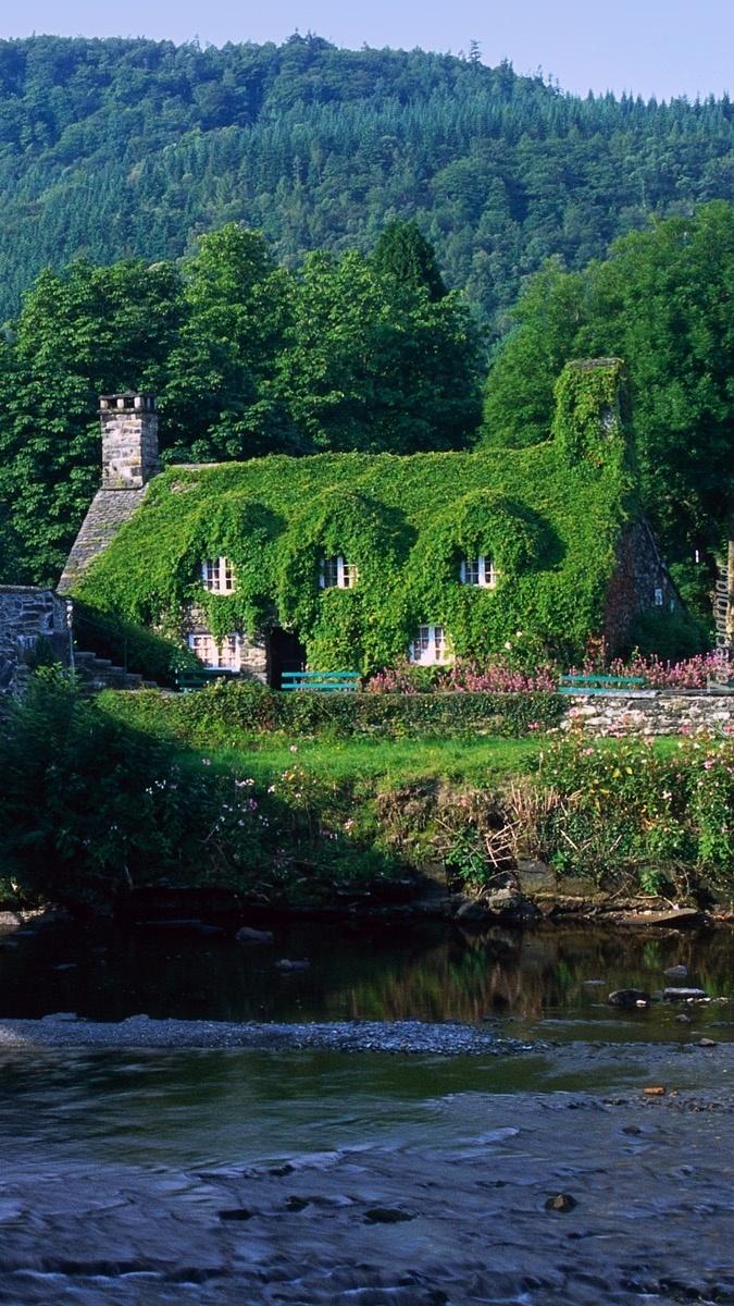 Dom w pnączach