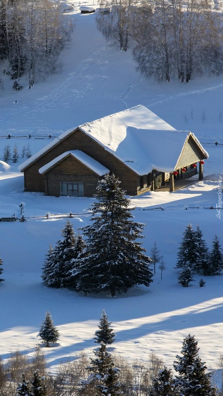 Dom w zaśnieżonym lesie