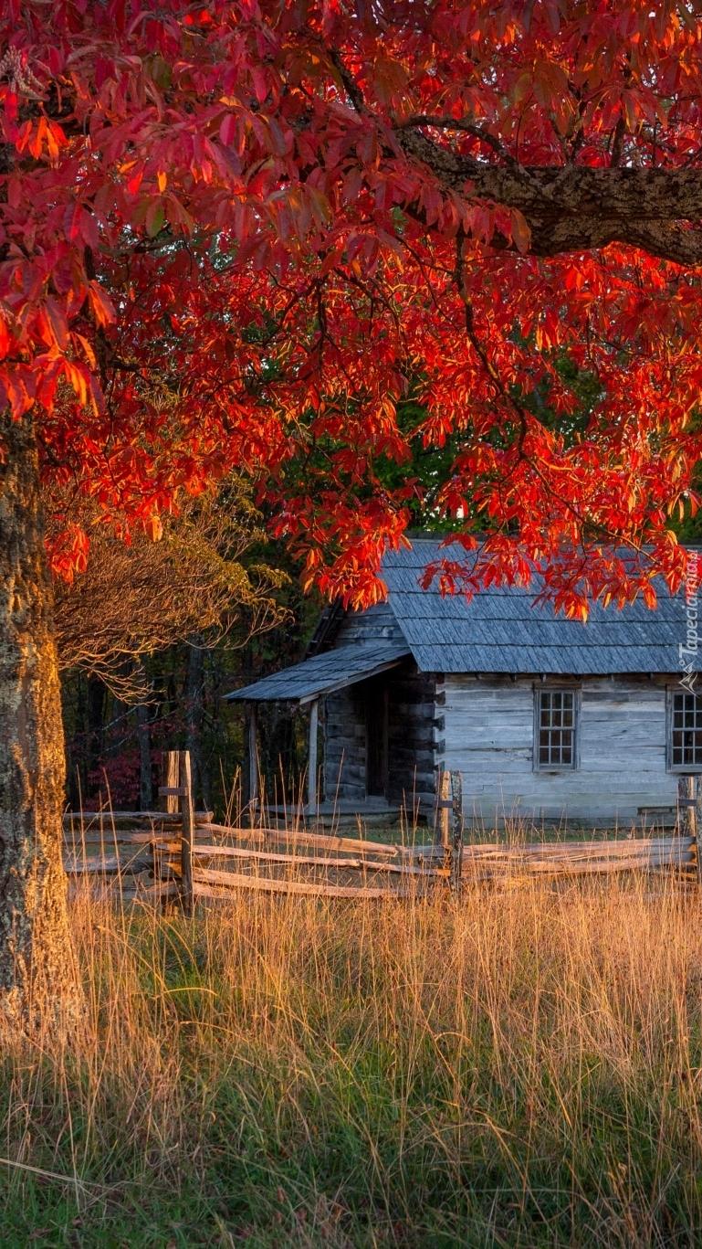 Domek pod drzewem
