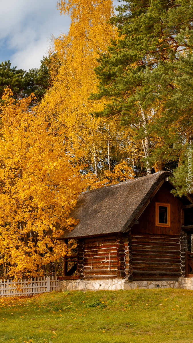 Domek pod jesiennymi drzewami