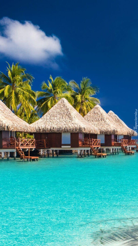 Domki pod palmami nad morzem