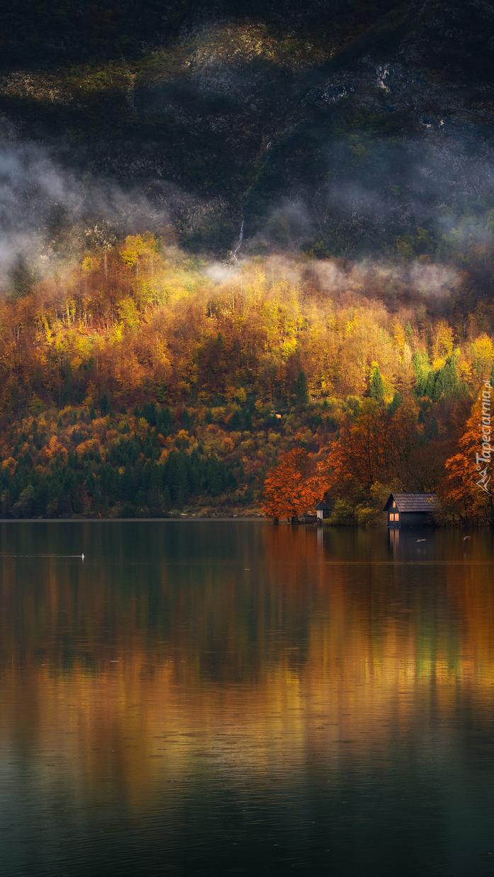 Domki w lesie nad jeziorem