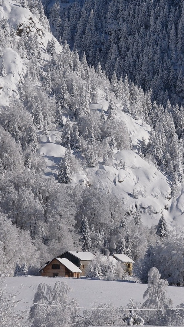 Domy pod zimowym lasem