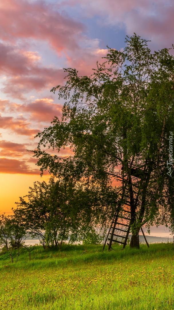 Drabina pod drzewem na łące