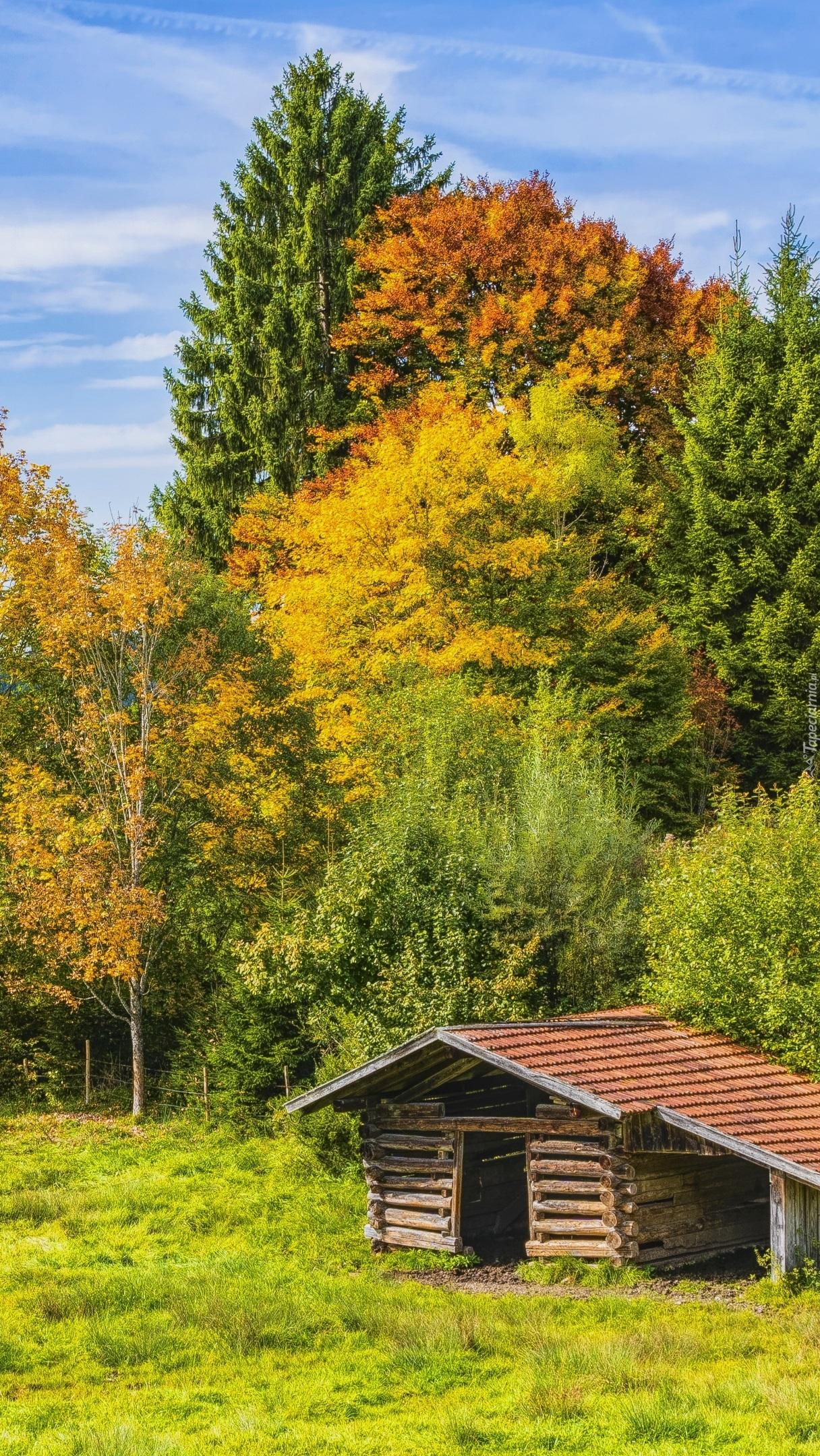 Drewniana chata na polanie pod lasem