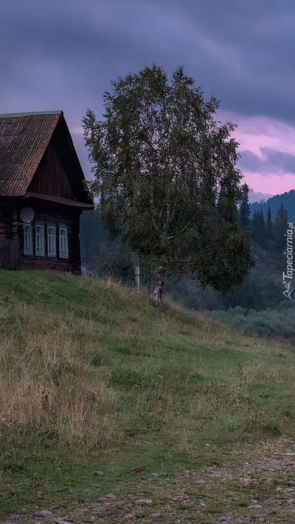 Drewniany dom obok brzozy