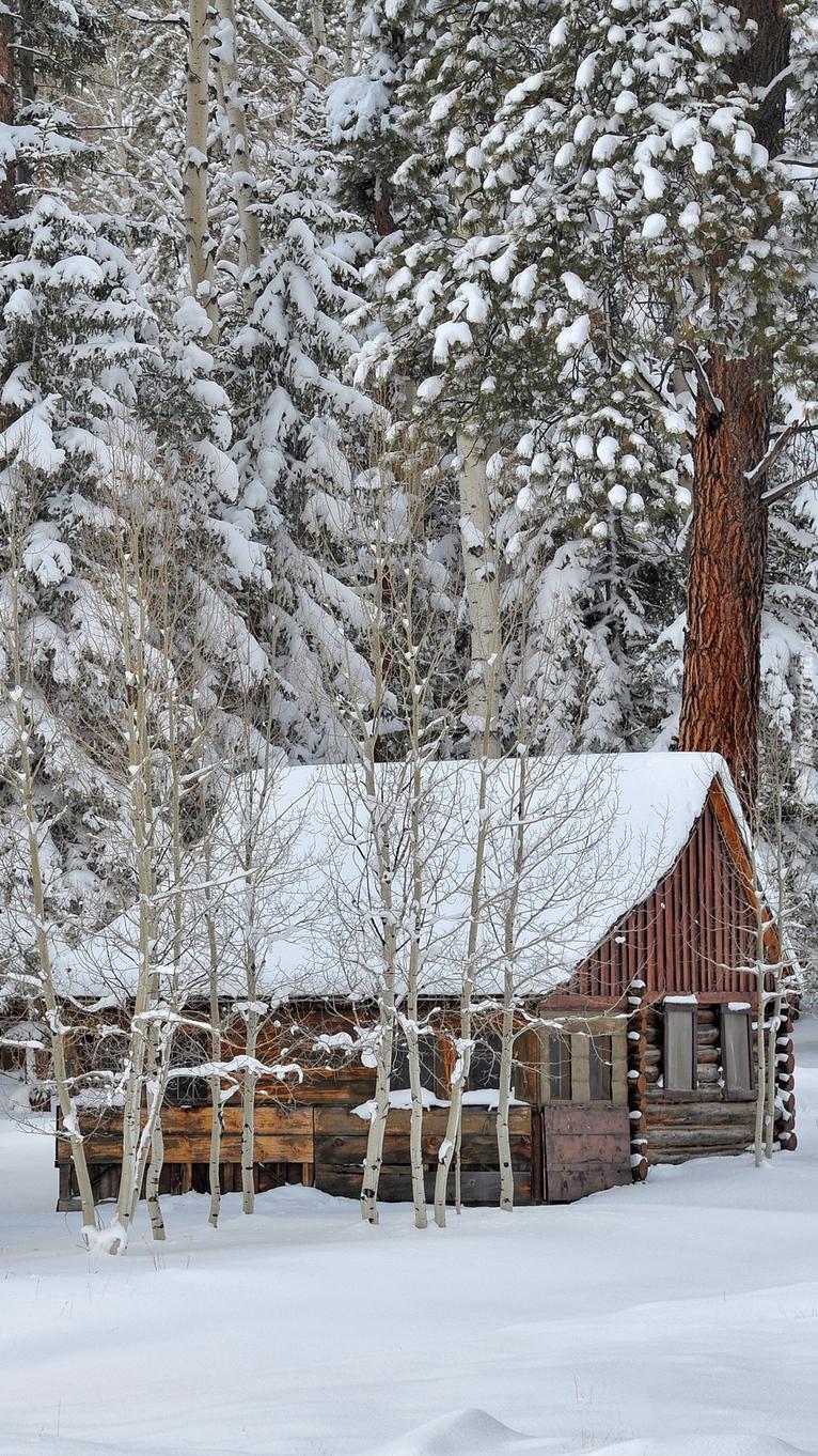 Drewniany dom pod ośnieżonymi drzewami