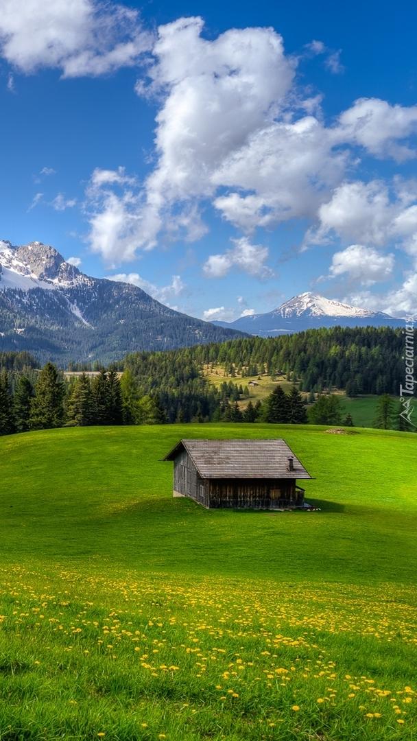 Drewniany domek na łące w górach