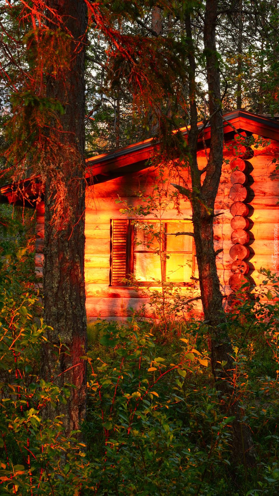 Drewniany domek w blasku słońca