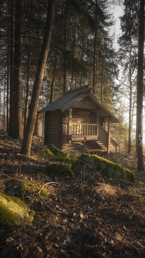 Drewniany domek w lesie