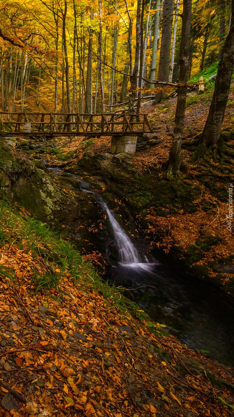 Drewniany mostek nad rzeczką