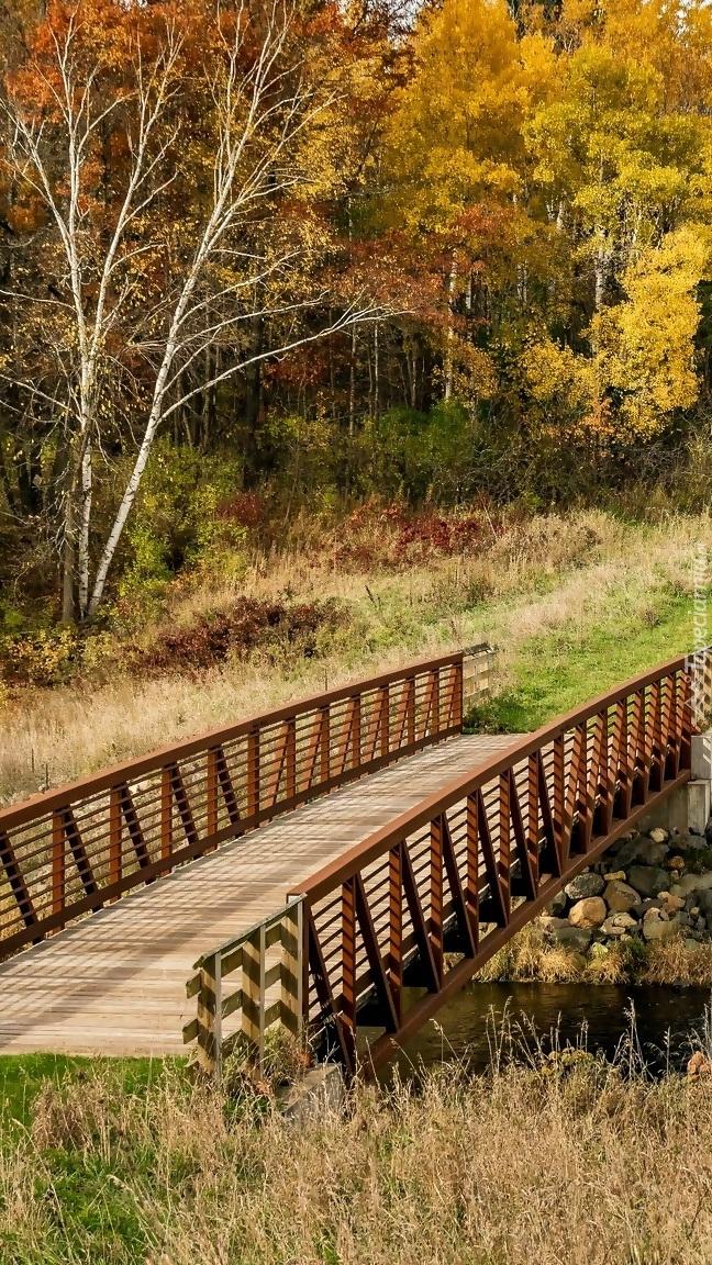Drewniany mostek w jesiennym lesie