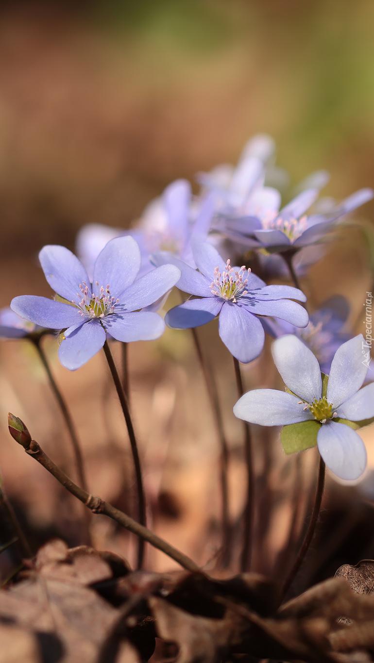 Drobne kwiatki