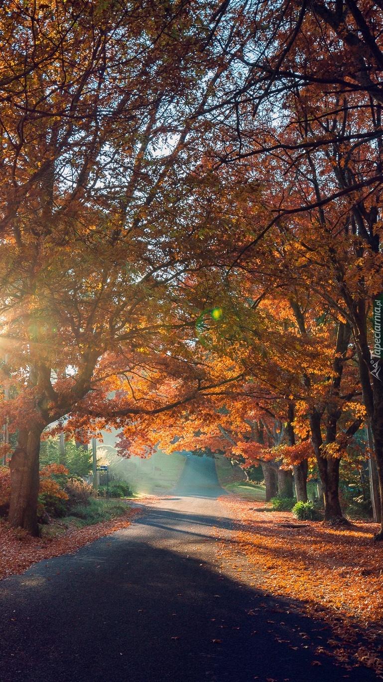 Droga jesienią o poranku