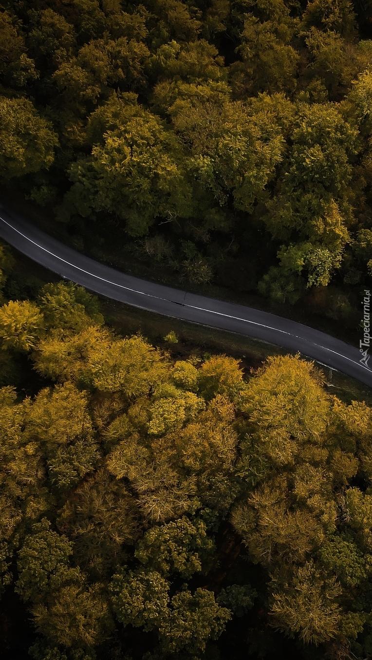Droga między jesiennymi drzewami