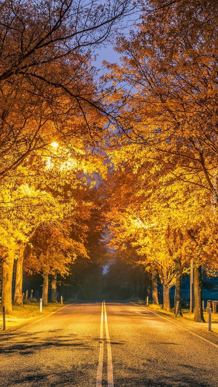 Droga oświetlona latarniami