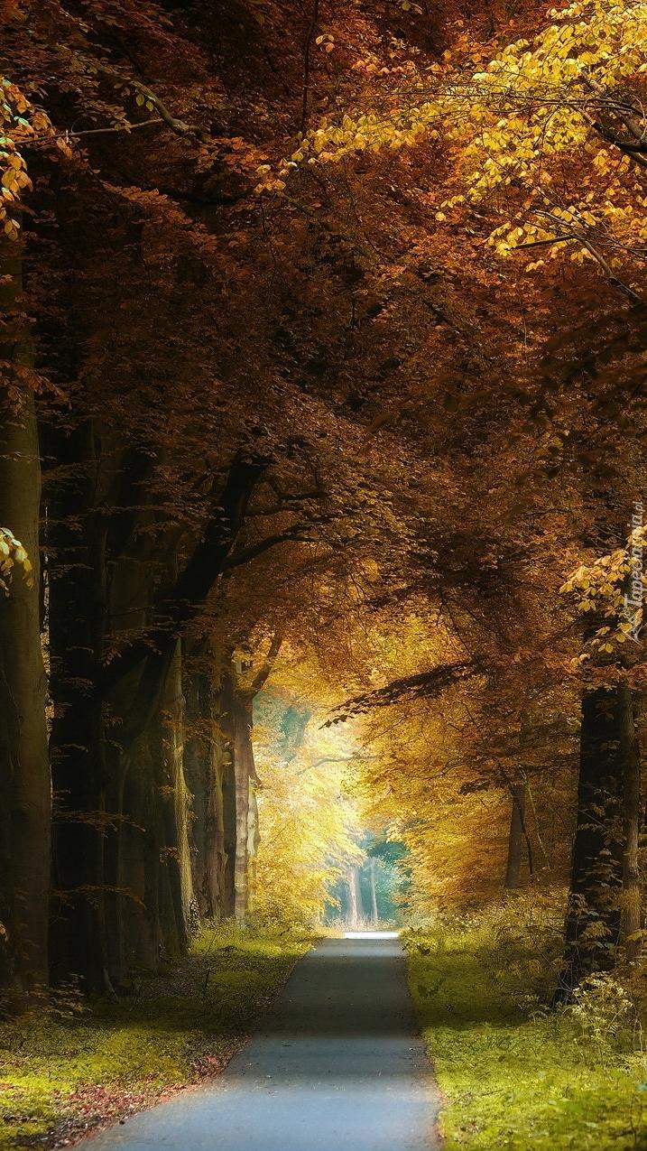Droga pod jesiennymi drzewami