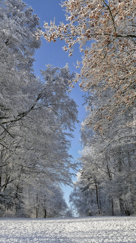 Droga pod oszronionymi drzewami