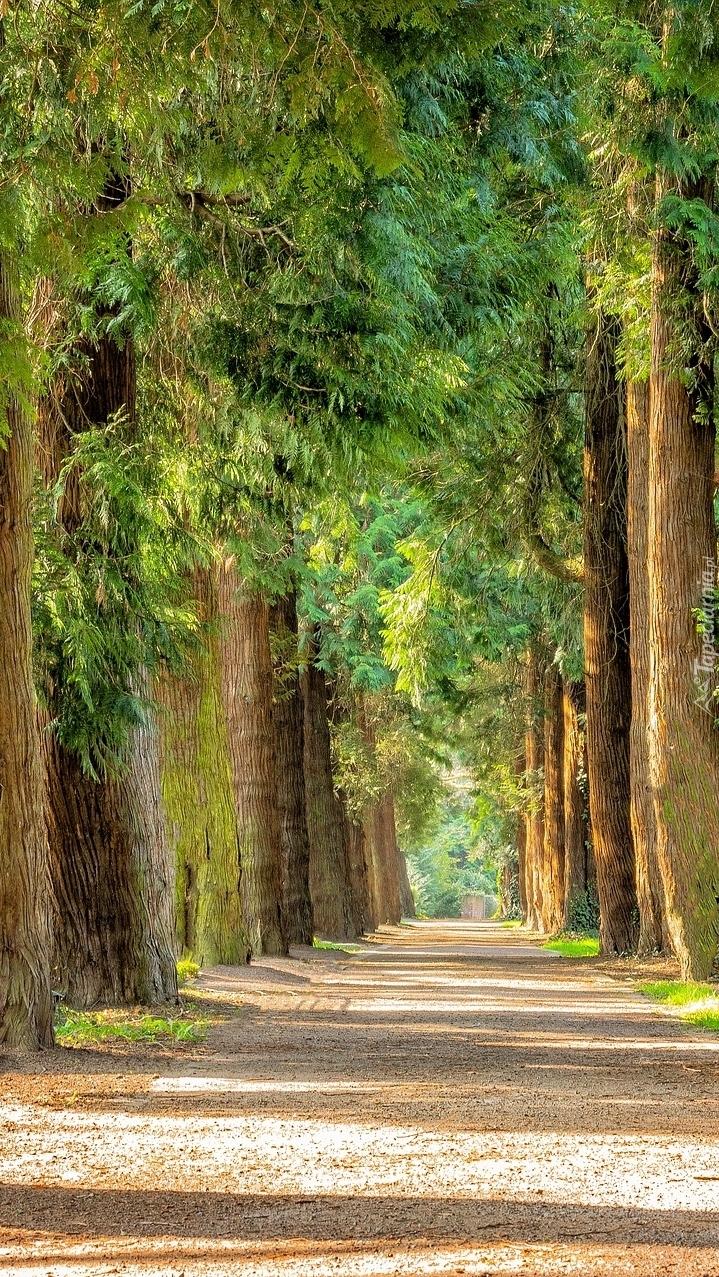 Droga pomiędzy drzewami