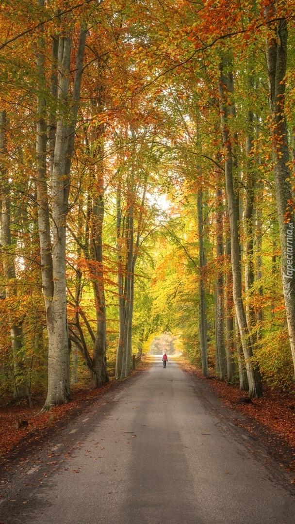 Droga pośród jesiennych drzew