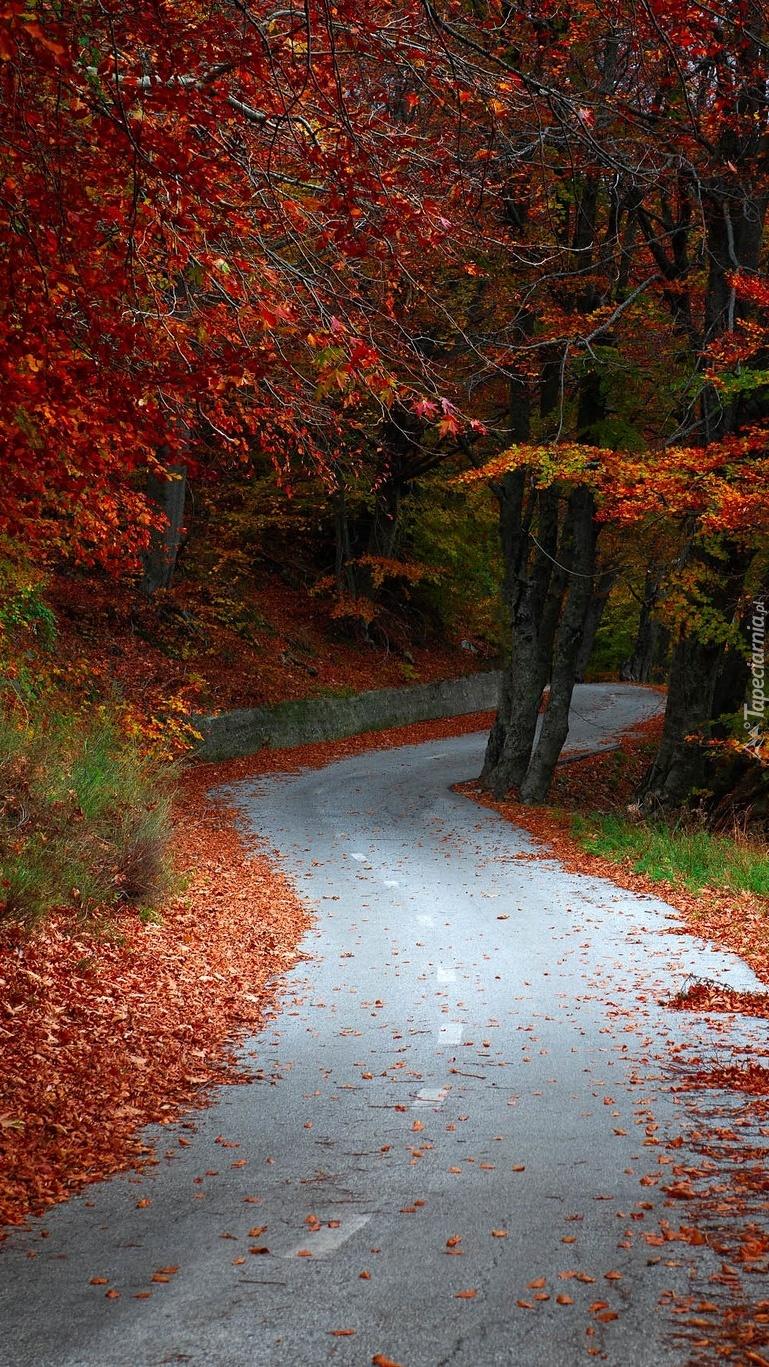 Droga przez jesienny las