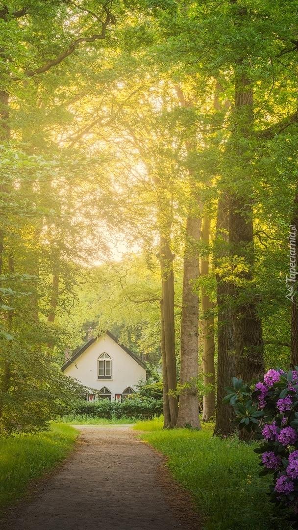 Droga przez las do domu