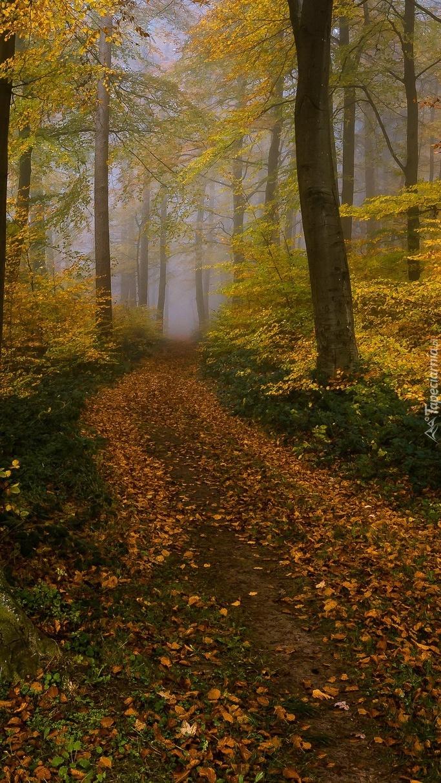 Droga przez las liściasty