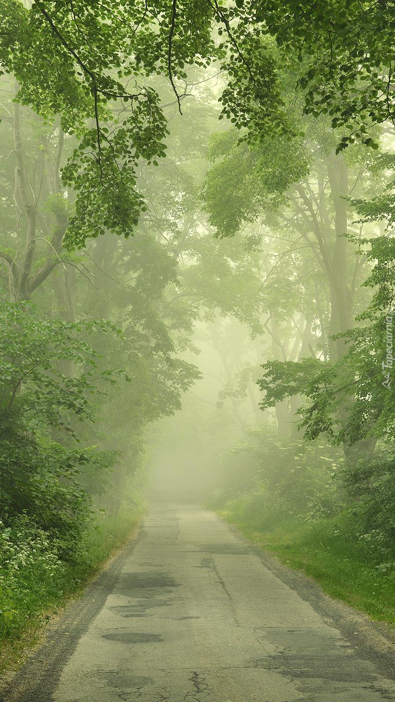 Droga przez las we mgle