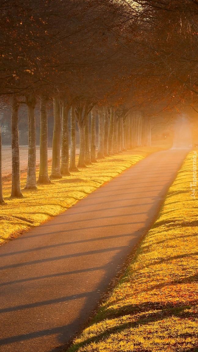 Droga przy drzewach we mgle