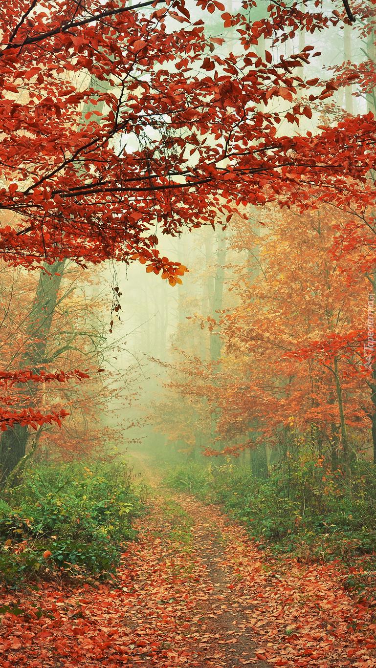 Droga przysypana liśćmi w jesiennym lesie