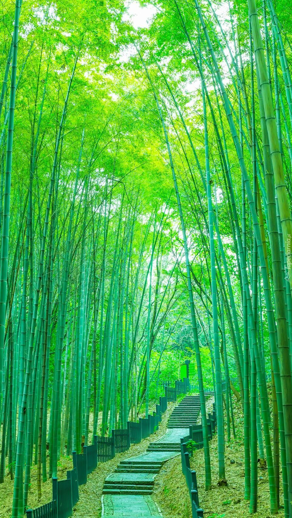 Droga w bambusowym lesie
