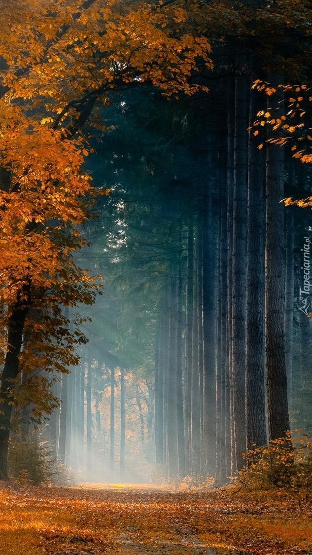 Droga w jesiennym lesie