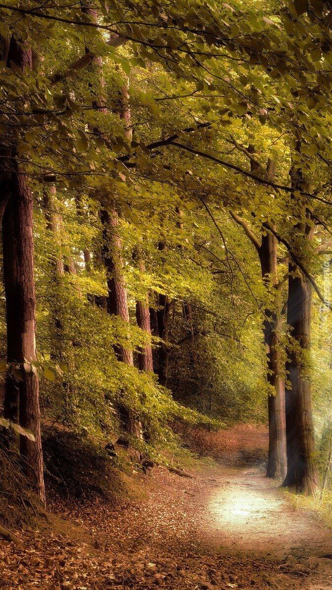 Droga w lesie liściastym
