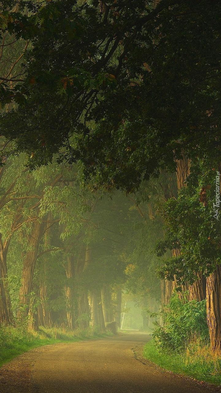 Droga w lesie o poranku