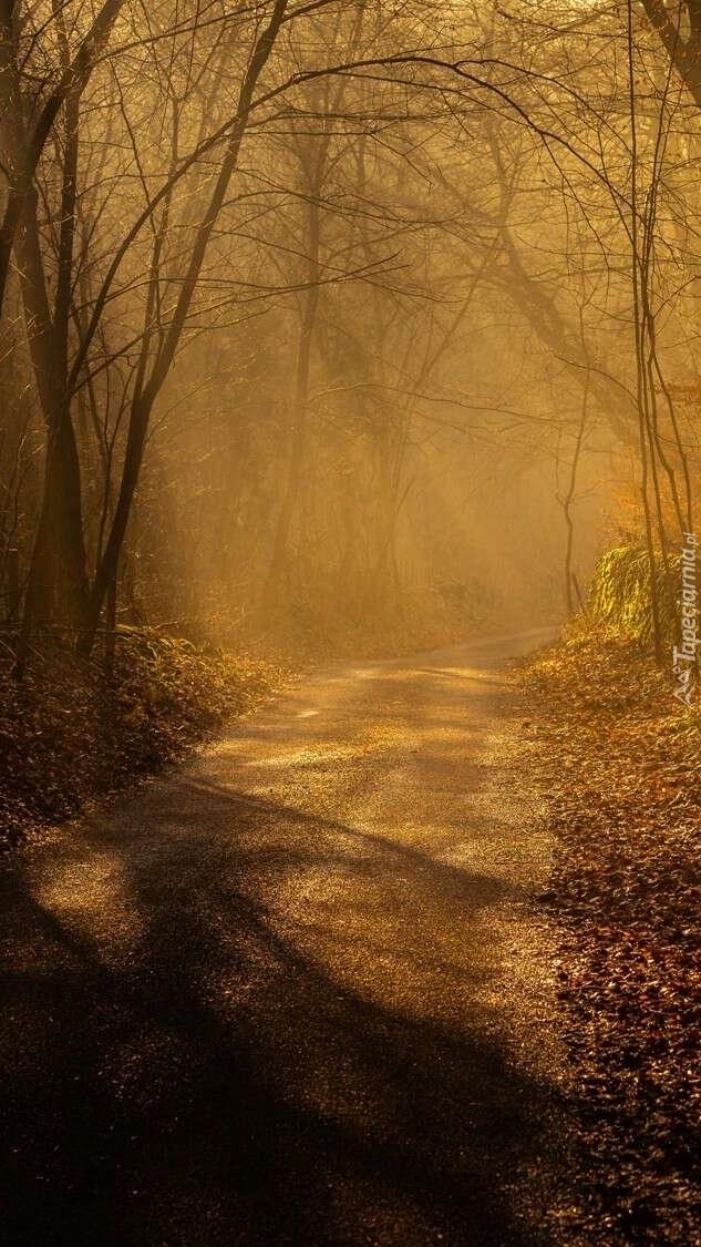 Droga w Parku Narodowym Peak District w Anglii