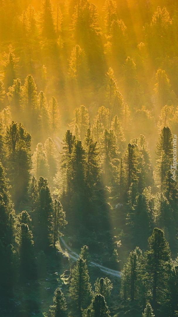 Droga w środku lasu we mgle