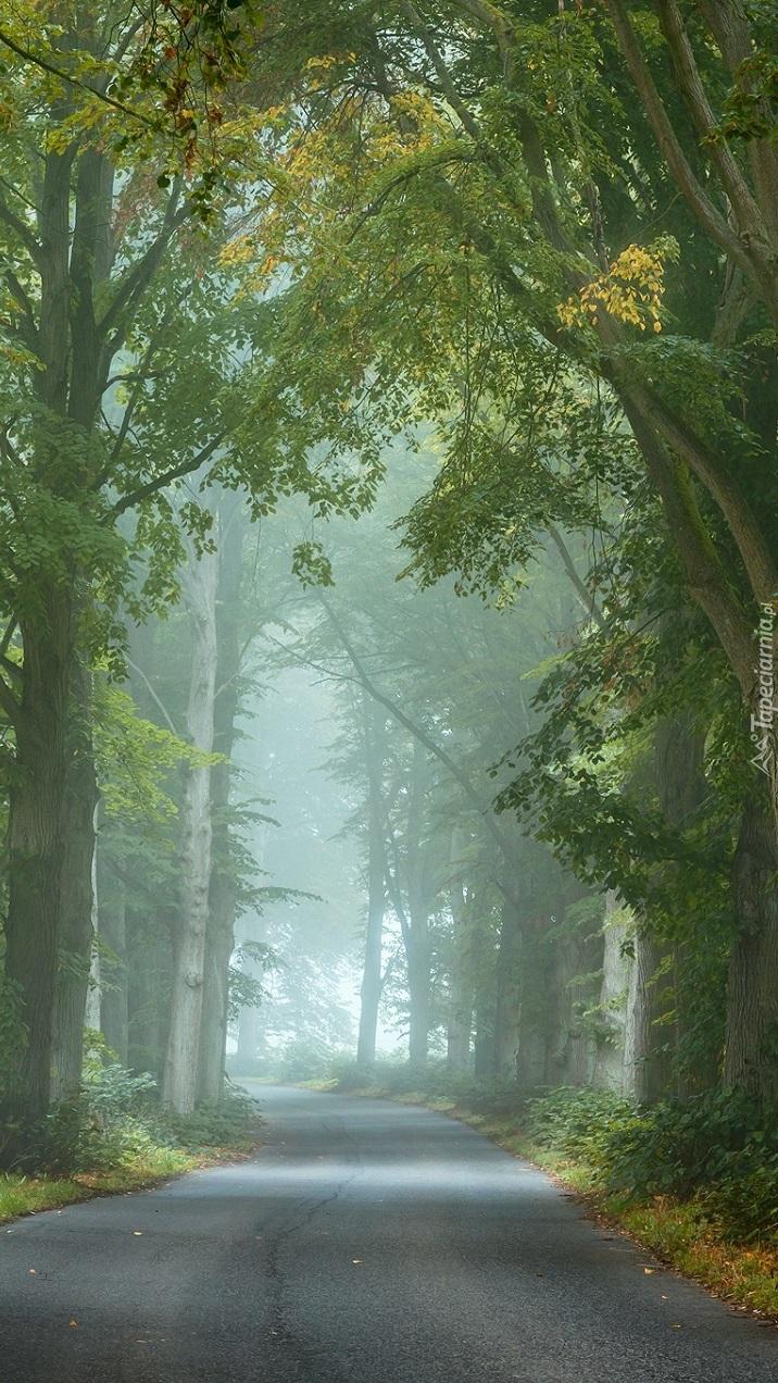 Droga w zamglonym lesie