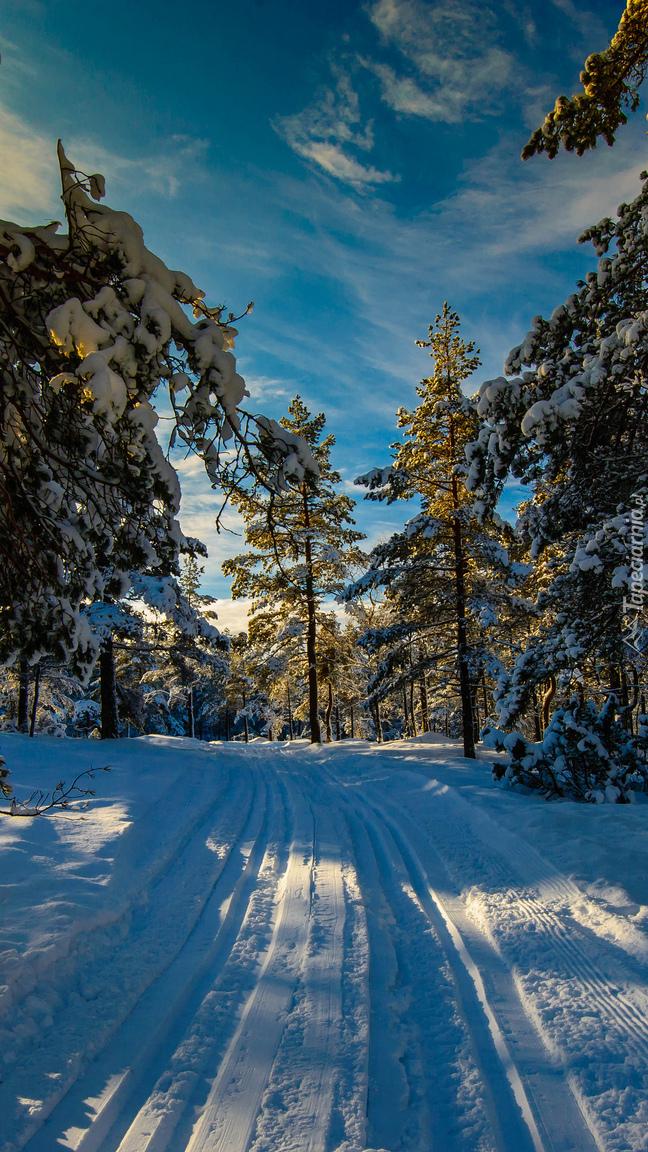 Droga w zimowym lesie