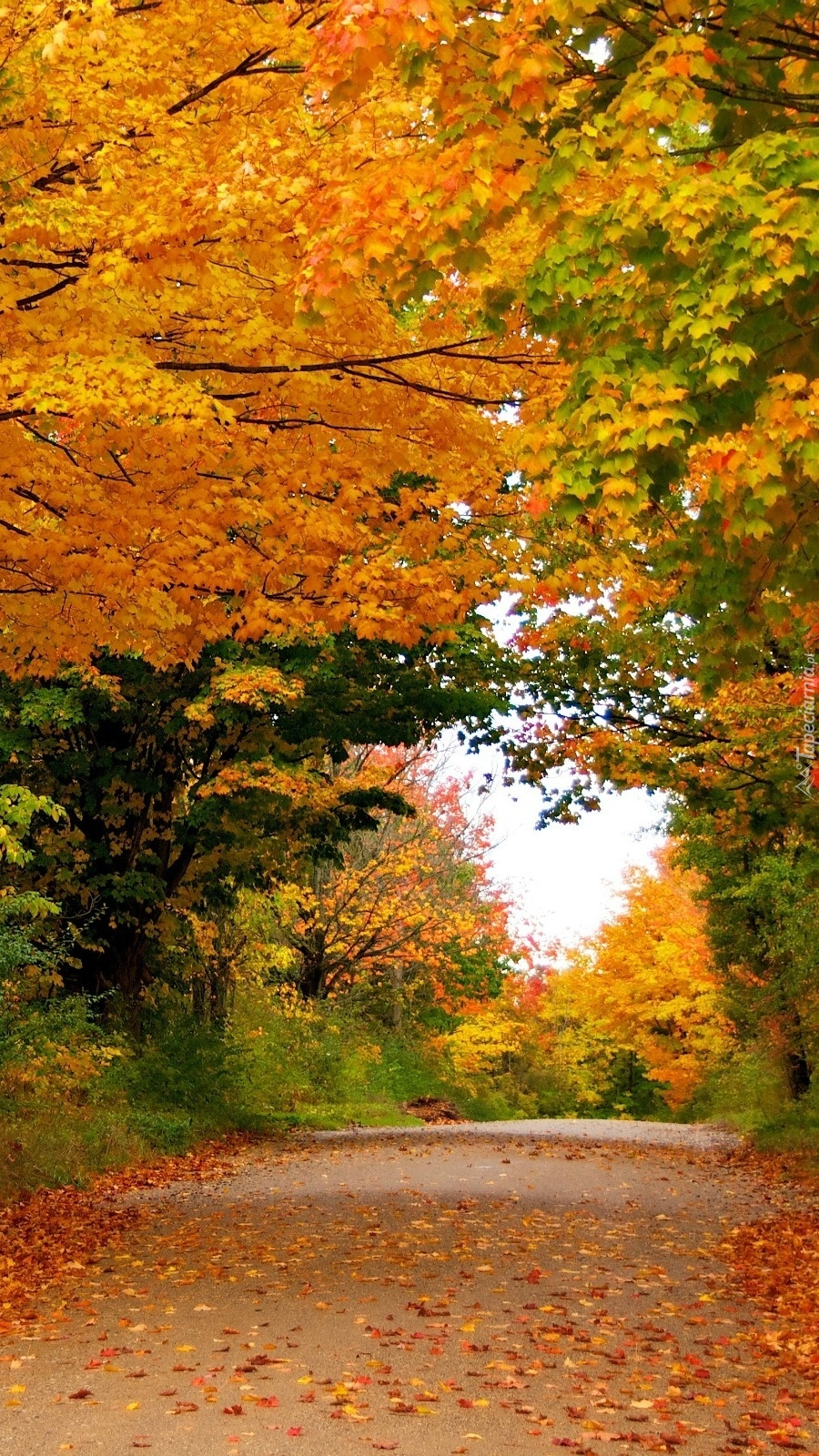 Droga wśród jesiennych drzew