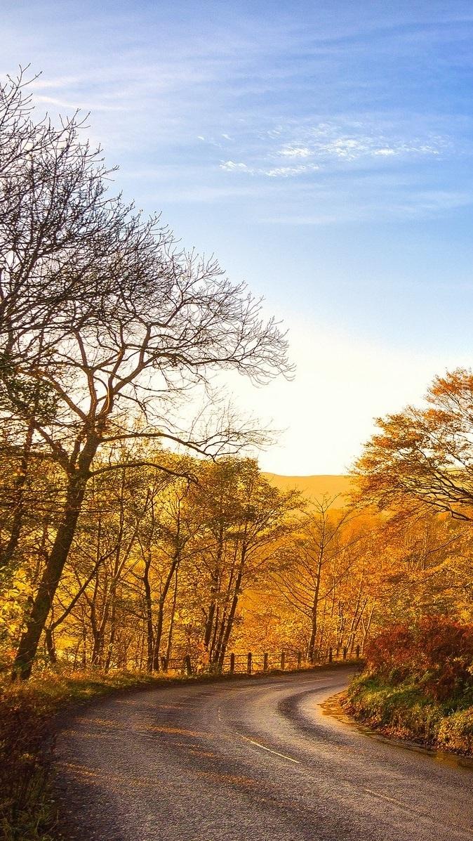 Droga z jesiennymi drzewami i płotkiem