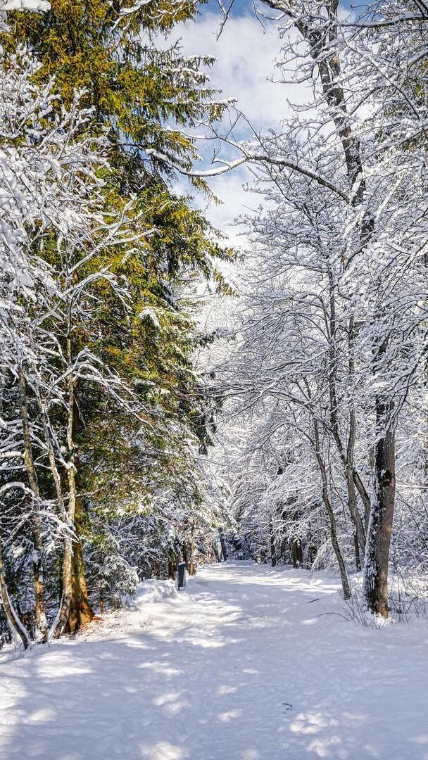 Droga zasypana śniegiem w lesie