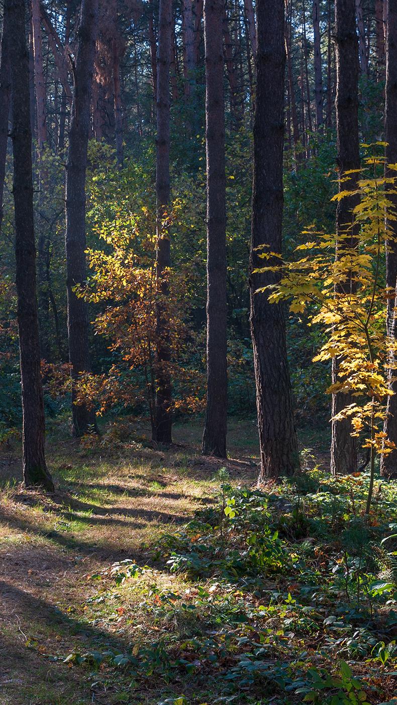 Dróżka  w jesiennym lesie
