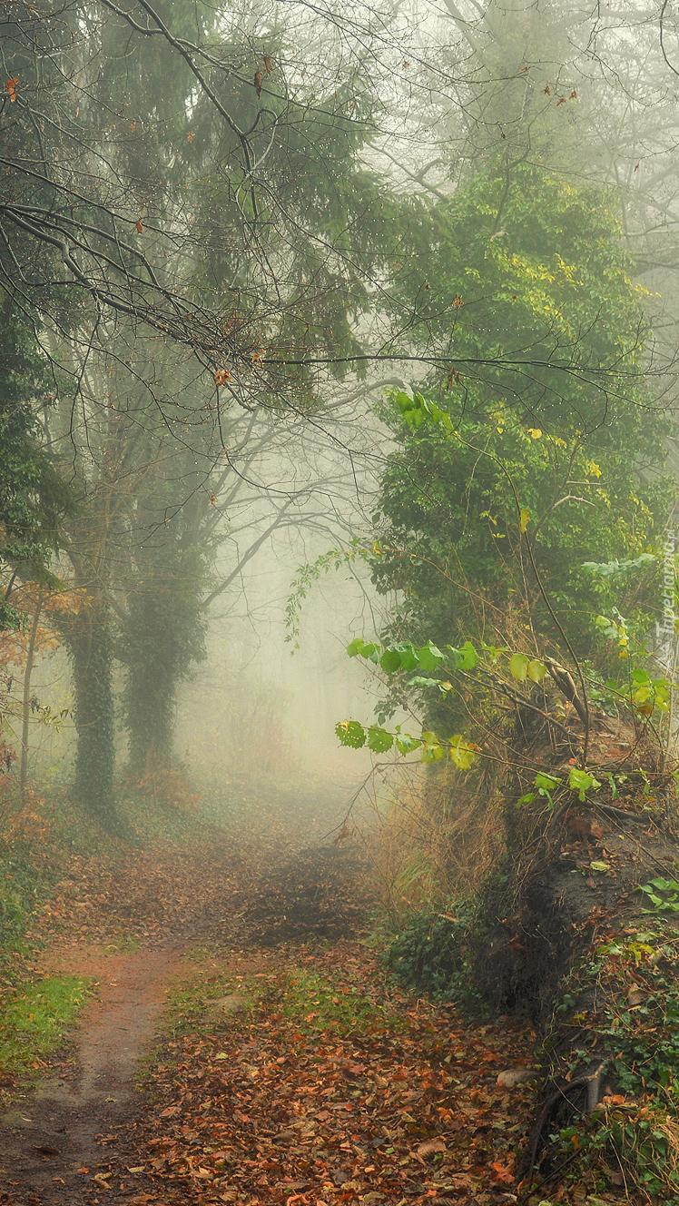 Dróżka we mgle