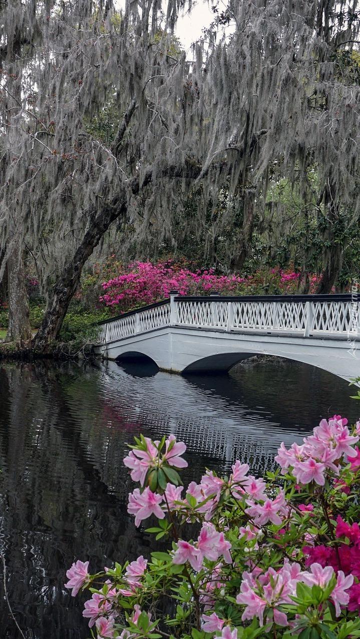 Drzewa i azalie przy mostku w parku